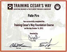 ceaser milan training certificate